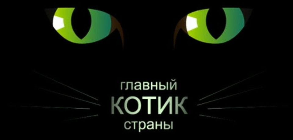 Главный котик страны — плеер
