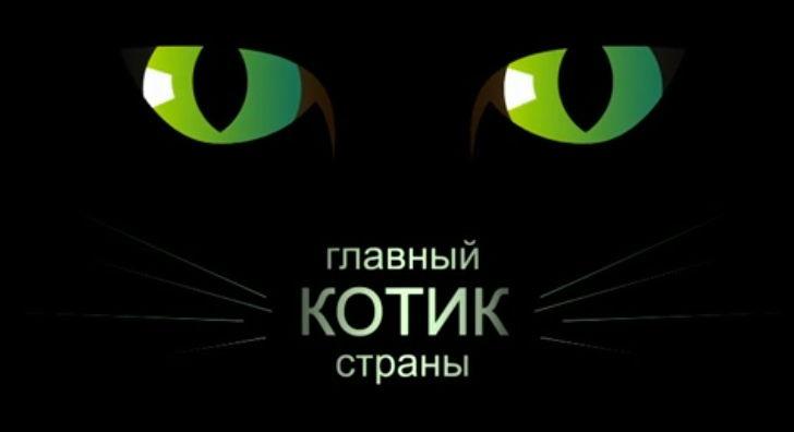 Главный котик страны. Первый канал